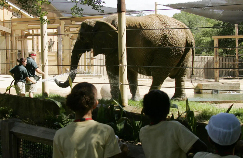 The caging of an elephant - The caging of an entrepreneur.